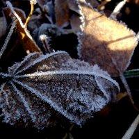 Первые заморозки.. :: Лариника Кузьменко