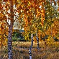 Осень :: Нургали Алибаев