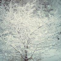Зима :: Юрий Крутский