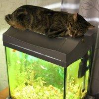 Классика: кошка на аквариуме - 5 :: Владимир Мишин
