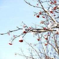 Начало зимы :: Ирина Блажи
