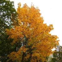 Осень :: Katherine Mozgo
