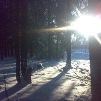 Морозное утро :: Максим Короткий