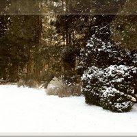 Winter_1 :: Яков Геллер
