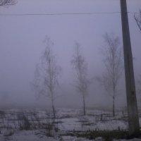 Туман :: Данил Суров