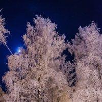 Зимняя сказка :: Дмитрий Сальков