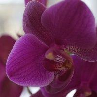 Орхидея :: Andy Bayt