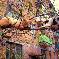 Коты прилетели ! :: Юрий Окунев
