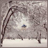 Сегодня будет Рождество,  весь город в ожиданьи тайны... :: Ирина Данилова