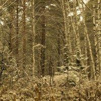 Первый снег :: Вадим Губин