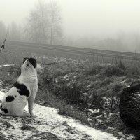 Пёс :: zmicier kazakevicz