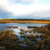 Пейзаж января. :: Антонина Гугаева