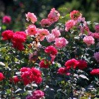 Райский сад :: Мария Мжельская