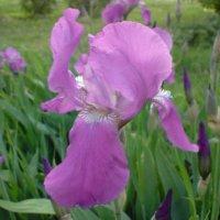 просто цветок... :: Валентина .