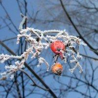 зима :: Галина Барбашина
