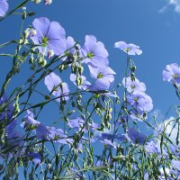 Небесная синь :: Надежда Рябинина