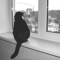 Окно в мир. :: Дмитрий