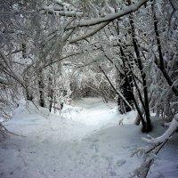 зимняя сказка :: mihail