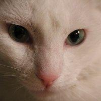соседский кот :: Леся ...