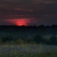 июль закат, фацелия :: Татьяна Чернова
