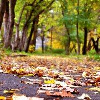 осень :: Евгения Копейкина