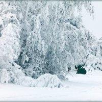 Застрявшие в снегах. :: Алексей Хаустов