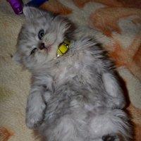 Малыш Бася :: Анатасия Николаева