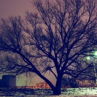Дерево :: Александр Семенов