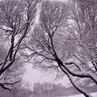 Как хороша зимы чарующая греза!.. :: Ольга Русанова (olg-rusanowa2010)