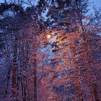 И снег ронял на лица свет, . . . на плечи... :: Ольга Русанова (olg-rusanowa2010)