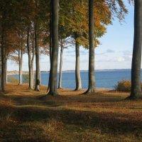 лес у берега моря в Дании :: Марат Макс