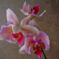 Орхидея :: Ирина Приходько