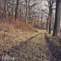 Ліс :: Алина Марцюга