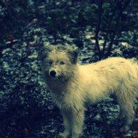 Бродячий пёс. :: Георгий Куценко