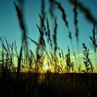 Закат в траве :: Ramil Suleymanov