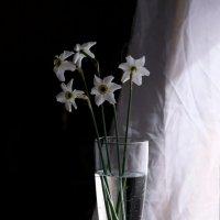 Легкоперстный запах цветов. :: Vladimir Shapoval