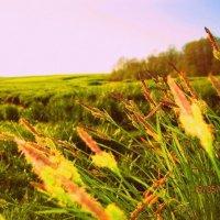 веяние весны :: Надежда Калинина