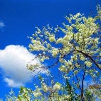 облако и цветы :: Надежда Калинина