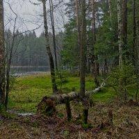 хороша зима, зелена! :: Ирэна Мазакина