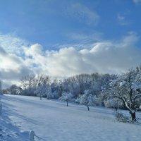 Зимний день :: Tatjana Savelev