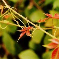 Зобнина Анастасия - Природа :: Фотоконкурс Epson