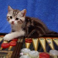 Давай сыграем. :: Yuriy Bazhenov