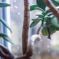 Денежное дерево :: Анастасия Краевская