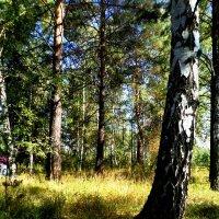 Лес :: Надежда Дорохова