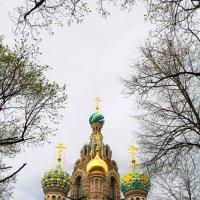 Храм Спаса на Крови :: Сергей Залаутдинов