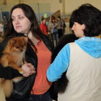 Выставка собак :: Николай Авсеев
