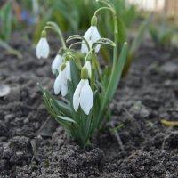 весна :: N. Efimkina