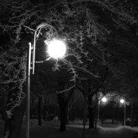 В зимнем парке... :: Дмитрий Дмитрий