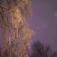 Зима, которой так не хватает... :: Дмитрий Дмитрий