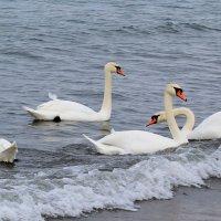 Лебеди... :: Tania D